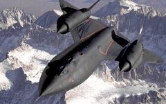 Tapeta ws_Blackbird_in_midair_2560x1600.jpg