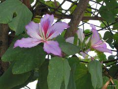 Tapeta flower.jpg