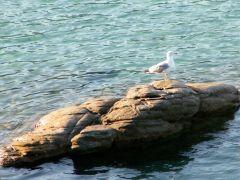Tapeta seagull-on-rock.jpg